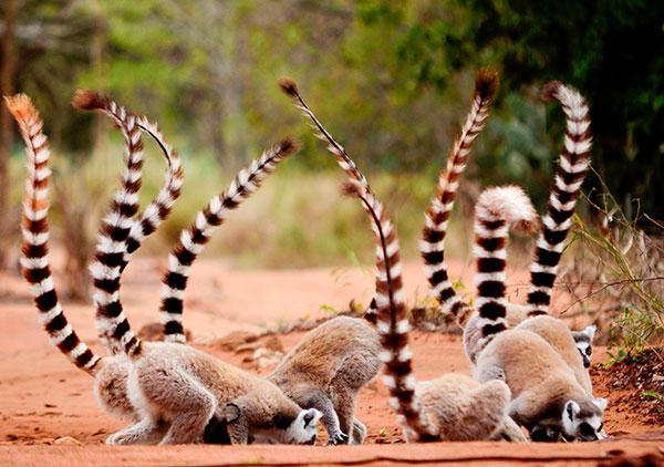 Madagaskar image